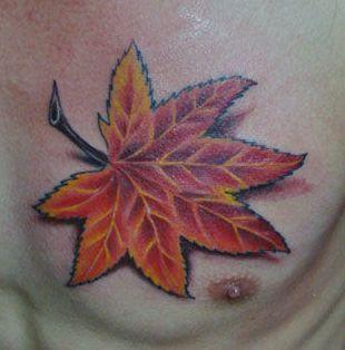 枫叶纹身:胸部彩色枫叶纹身图案