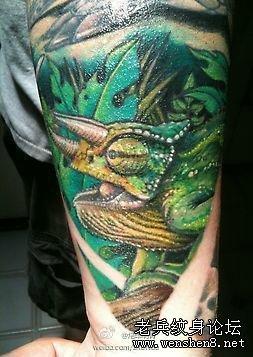一款手臂3d彩色蜥蜴纹身图案纹身图片