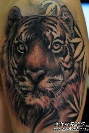 手臂老虎虎头纹身图案纹身图片图片