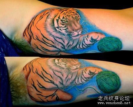 一款手臂彩色老虎纹身图案纹身图片