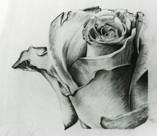 素描玫瑰纹身图案图片