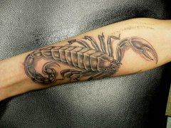 我现在手背有一个6cm纹身蝎子 2017年征兵纹身我能合格不