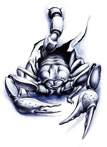 蝎子纹身图案手稿分享展示