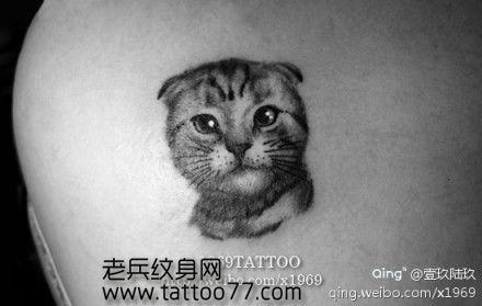 女生背部可爱的小猫咪纹身图案