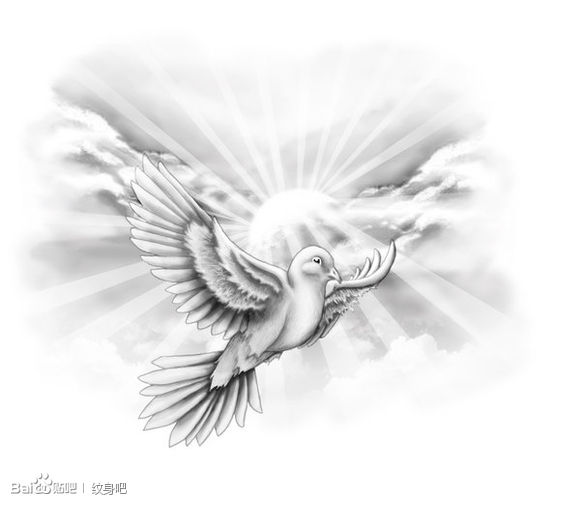 灰小燕子纹身手稿