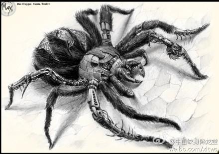 一款经典超酷的蜘蛛纹身手稿