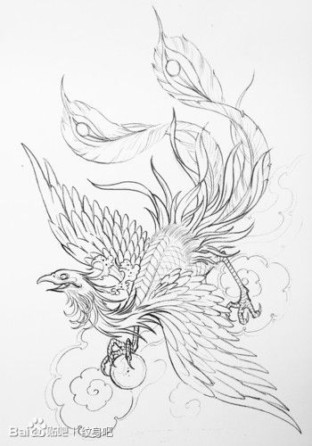 时尚经典的一款线条凤凰纹身手稿
