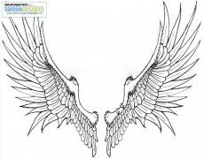 展开翅膀纹身手稿分享展示图片