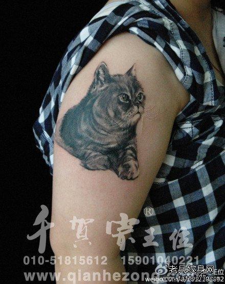 胳膊小猫咪纹身图案图片