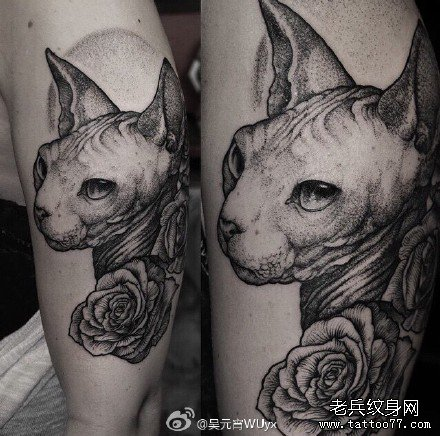 手部猫玫瑰纹身图案