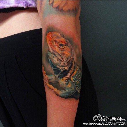 武汉刺青店:肩膀彩色蜥蜴纹身(tattoo)图案图片