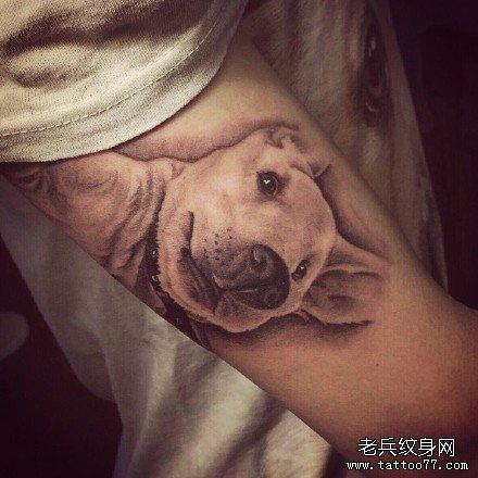 超写实纹身宠物狗纹身