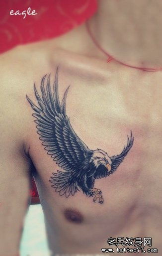 天空中翱翔,还有一些美丽的传说认为,鹰是一个太阳神,有着非常伟大的
