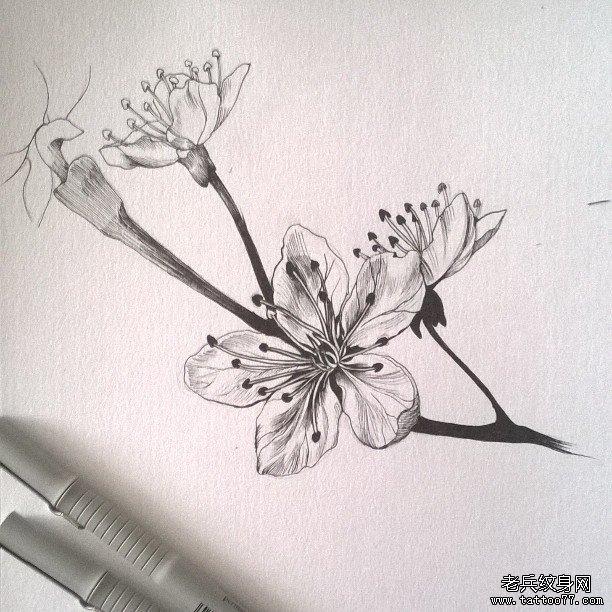 黑灰樱花纹身图案