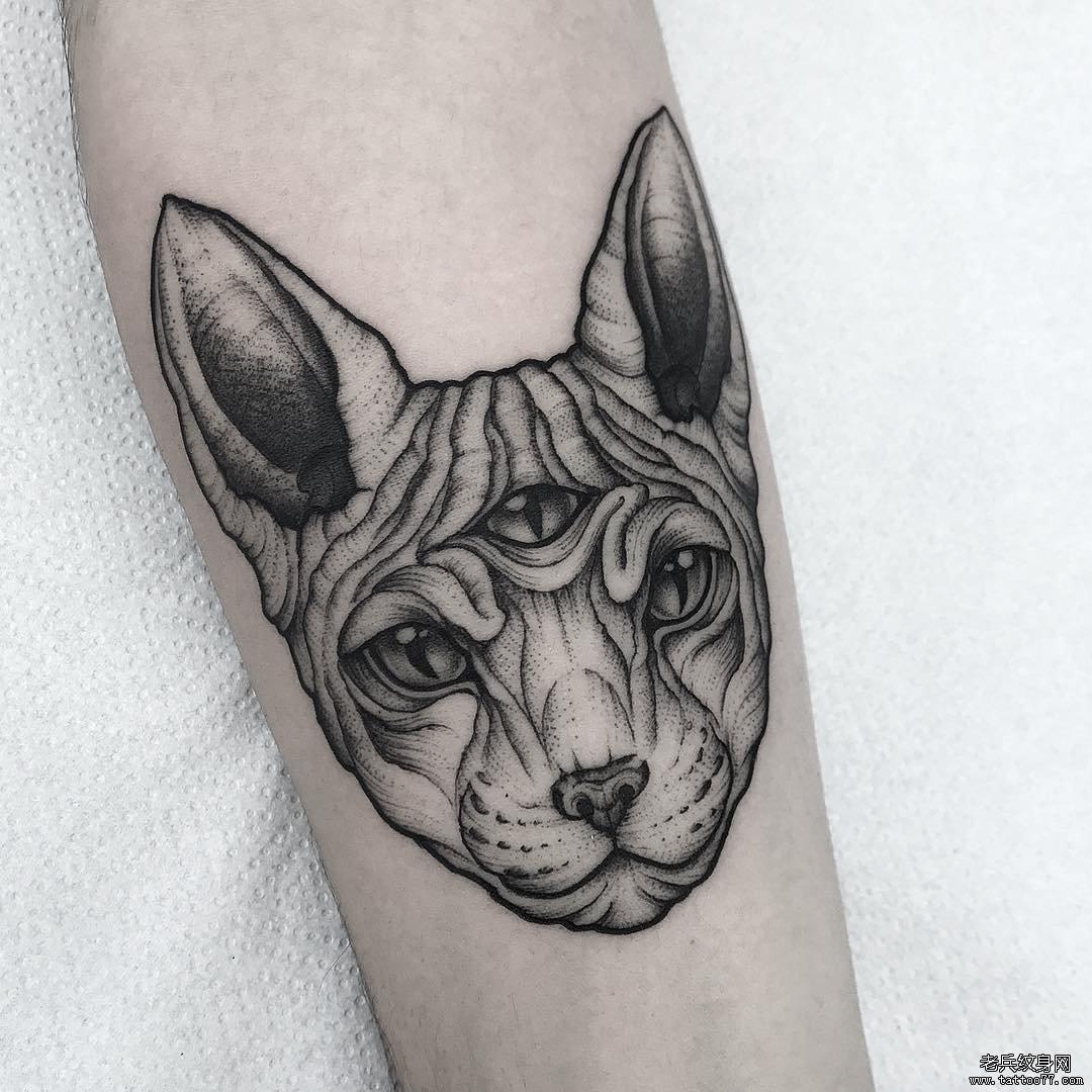 欧美猫小臂纹身图案