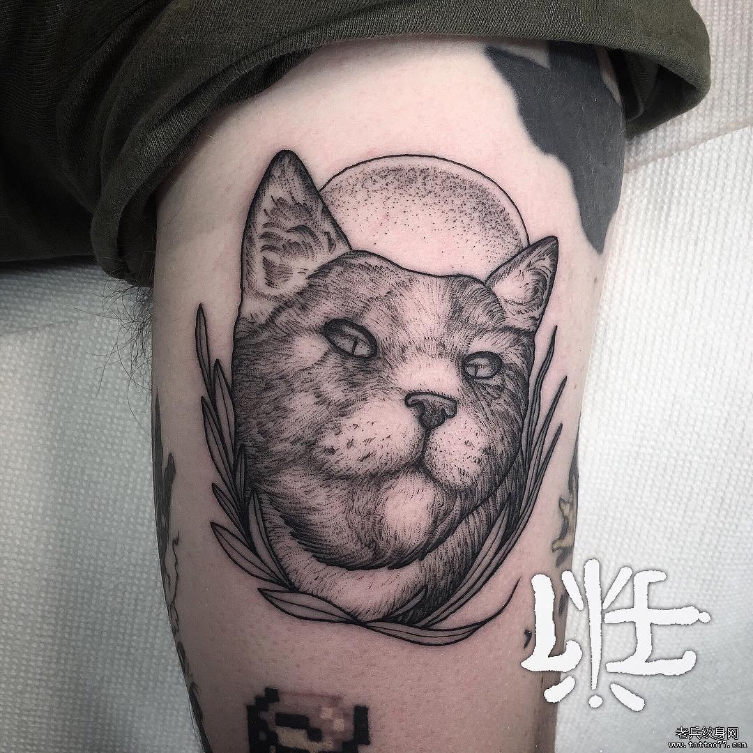 黑灰猫大臂纹身图案